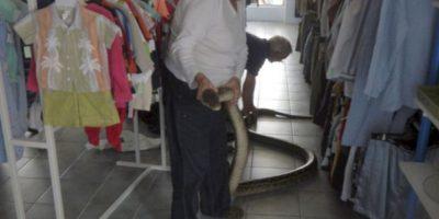 Serpientes. Foto:AP