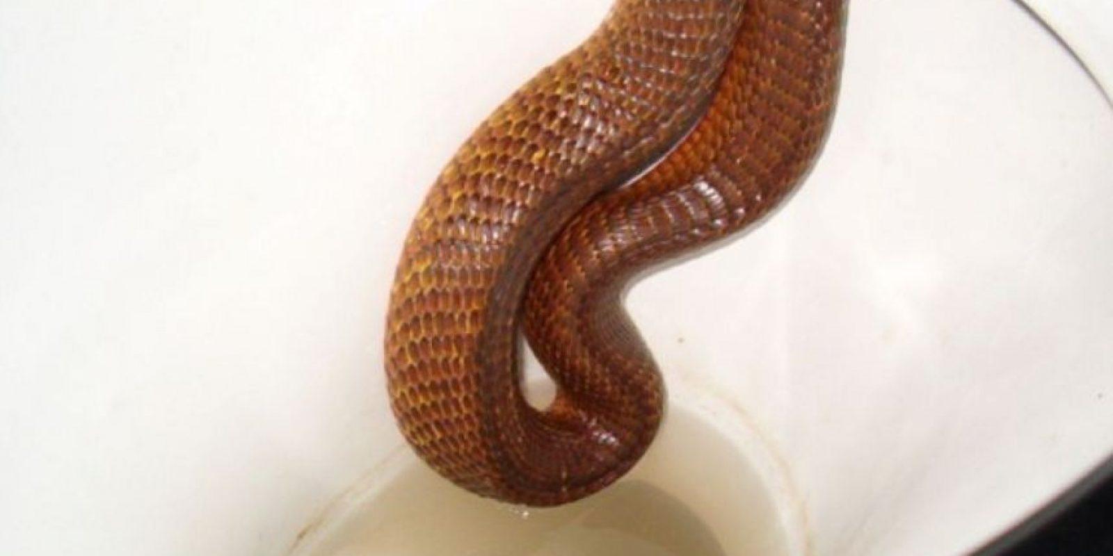 Serpientes en el retrete. Foto:Reddit