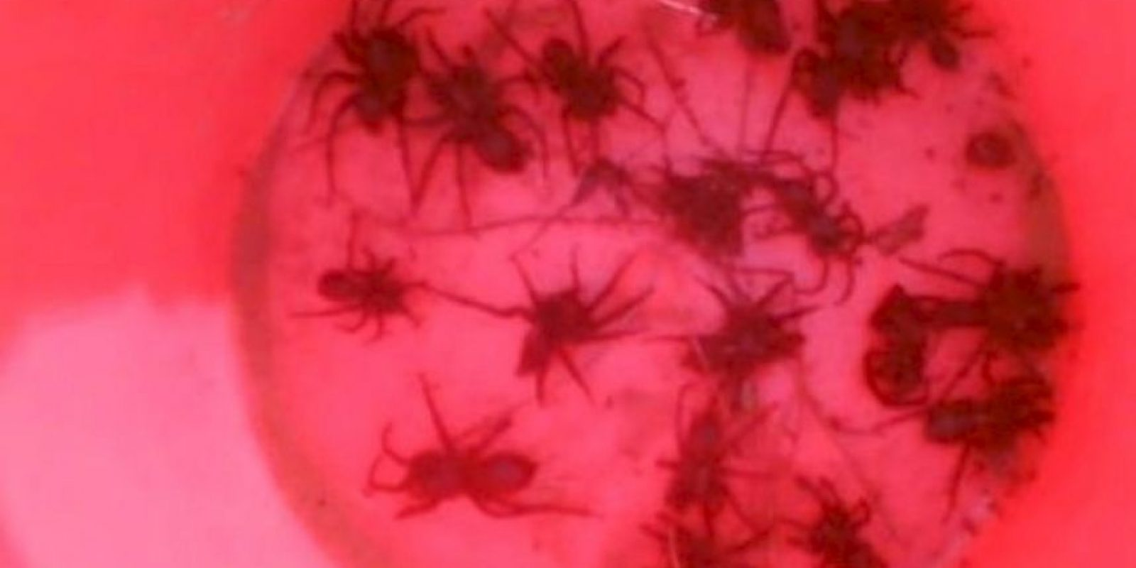 Arañas. Foto:Reddit