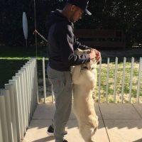 """Juega con su perro de nombre """"Poker"""". Foto:instagram.com/neymarjr"""
