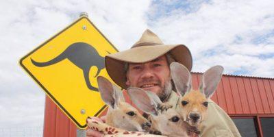 Fotos: Un australiano ha salvado a 28 bebés canguro