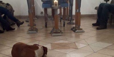 Todos llegaron a despedirse de doña Rose, hasta sus amigos caninos