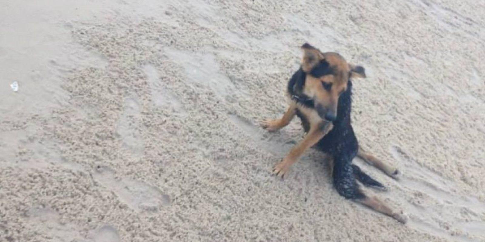 Así fue encontrado en junio de 2014, en la playa Hua Hin de Tailandia Foto:Reddit Meaags
