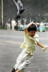 Esa paloma seguro tiene algo en contra de los humanos. Foto:BuzzFeed