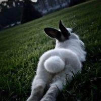 Relajarse y ver un bonito atardecer. Foto:Pinterest