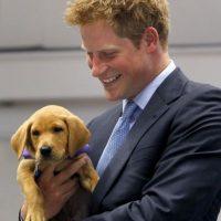 Este pequeño labrador roba la sonrisa del Príncipe Harry Foto:Getty Images
