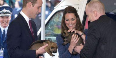 Los Duques de Cambrige disfrutan de acariciar a los pequeños cachorros Foto:Getty Images