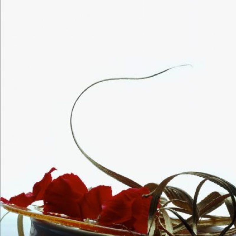 Crema de mamey estofada a la hoja de oro con jalea de pétalos de clavel Foto:Martha Ortiz