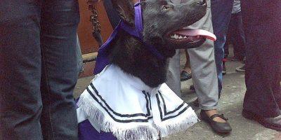 Este perro causa polémica en las redes sociales