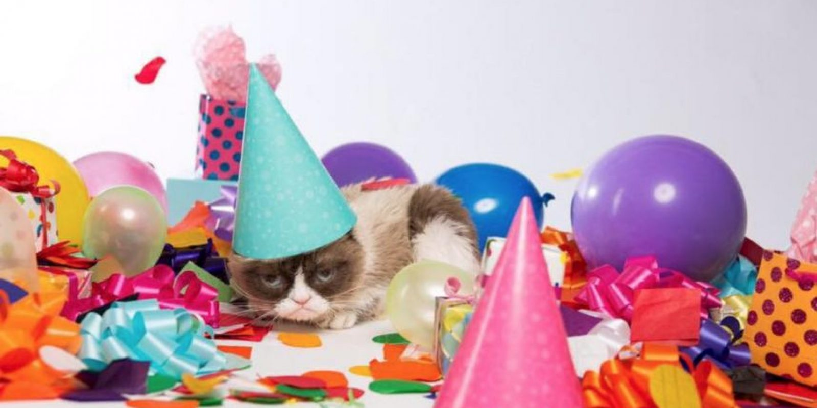 """Tardar Sauce cumple 3 años de nacimiento. Ella es la famosa """"Grumpy Cat"""" Foto:Grumpy Cat/Facebook"""