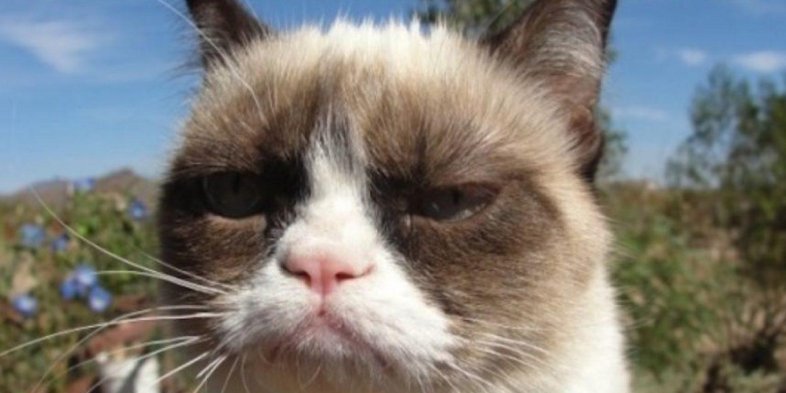 Su dueña, Tabatha Bundesen, afirma que su cara de debe al enanismo felino. Foto:Twitter
