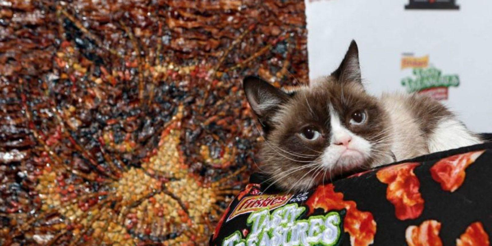 La mercancía licenciada se vende en Hot Topic Foto:Grumpy Cat/Facebook