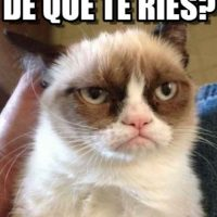 Lil Bub & Friendz es el documental donde aparece Grumpy Cat. Foto:Twitter