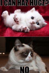 Grumpy Cat ganó el Premio al Meme del Año de BuzzFeed en los Premios Webby 2013 y el primer premio Golden Kitty en la segunda edición del Festival de Filme de Videos de Gatos de Internet. Foto:Twitter