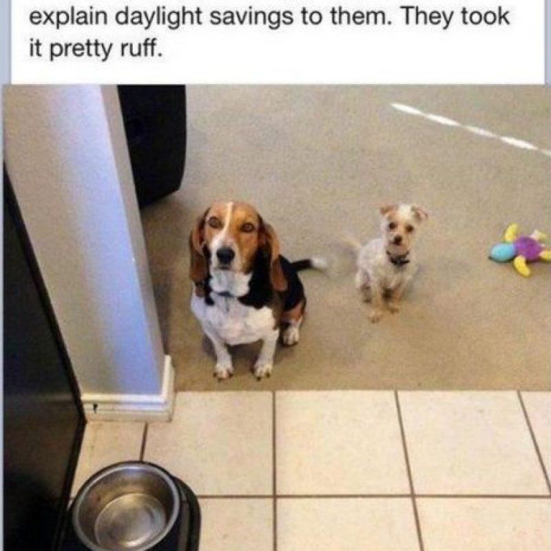 Saben a qué hora comen. Foto:Tumblr