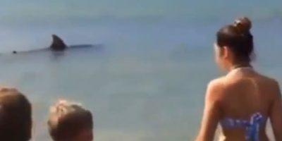 VIDEO: Tiburón sorprende a bañistas en plena orilla de la playa