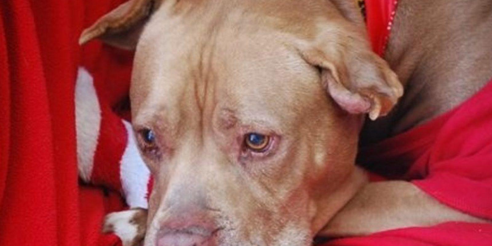 Duró 5 años sin ser adoptado. Foto:Chesternfawl/Facebook