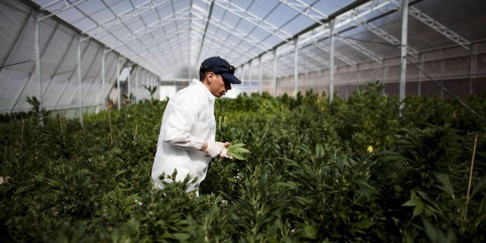 En 2009 se permitió traer consigo hasta cinco gramos de la yerba, para consumo personal Foto:Getty Images