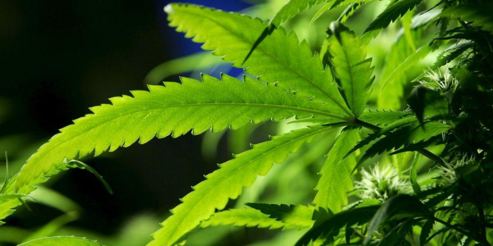 La nueva moción busca que las personas tengan hasta 6 matas de cannabis por metro cuadrado para consumo privado. Foto:GETTY