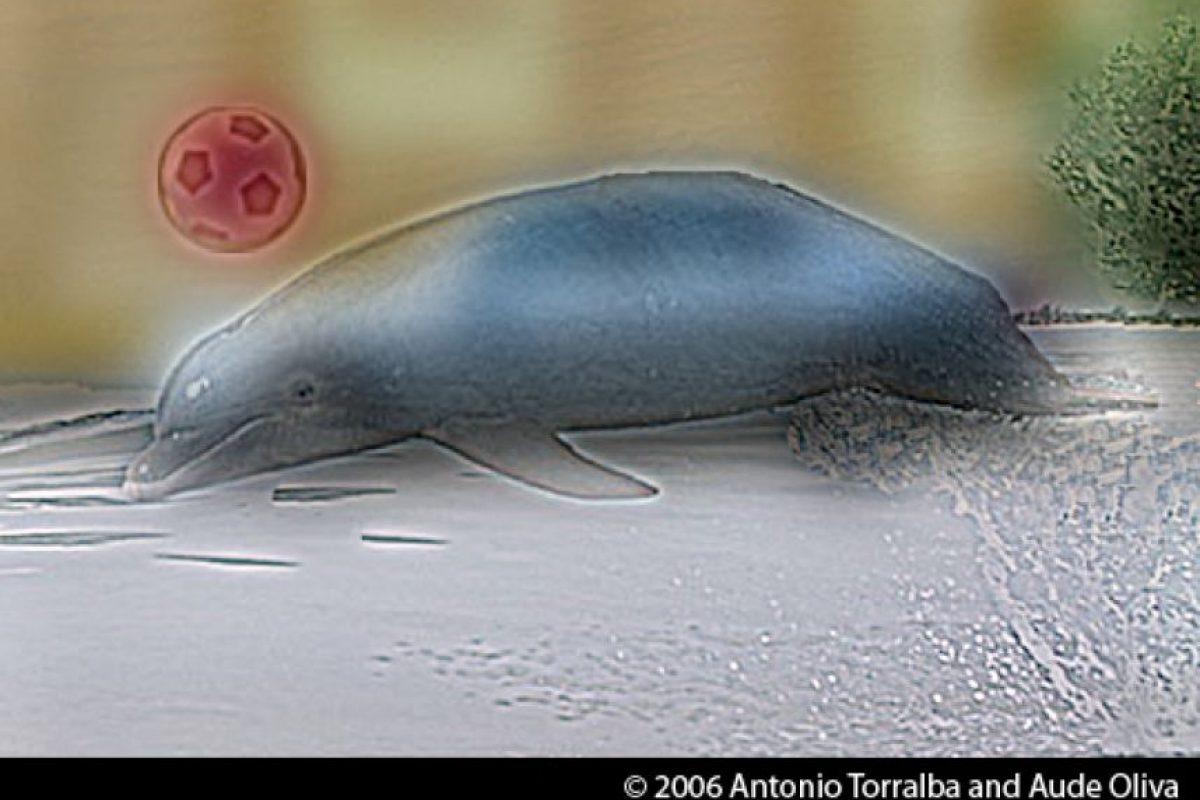 ¿Un delfín o un automóvil? Foto:mit.edu – Aude Oliva