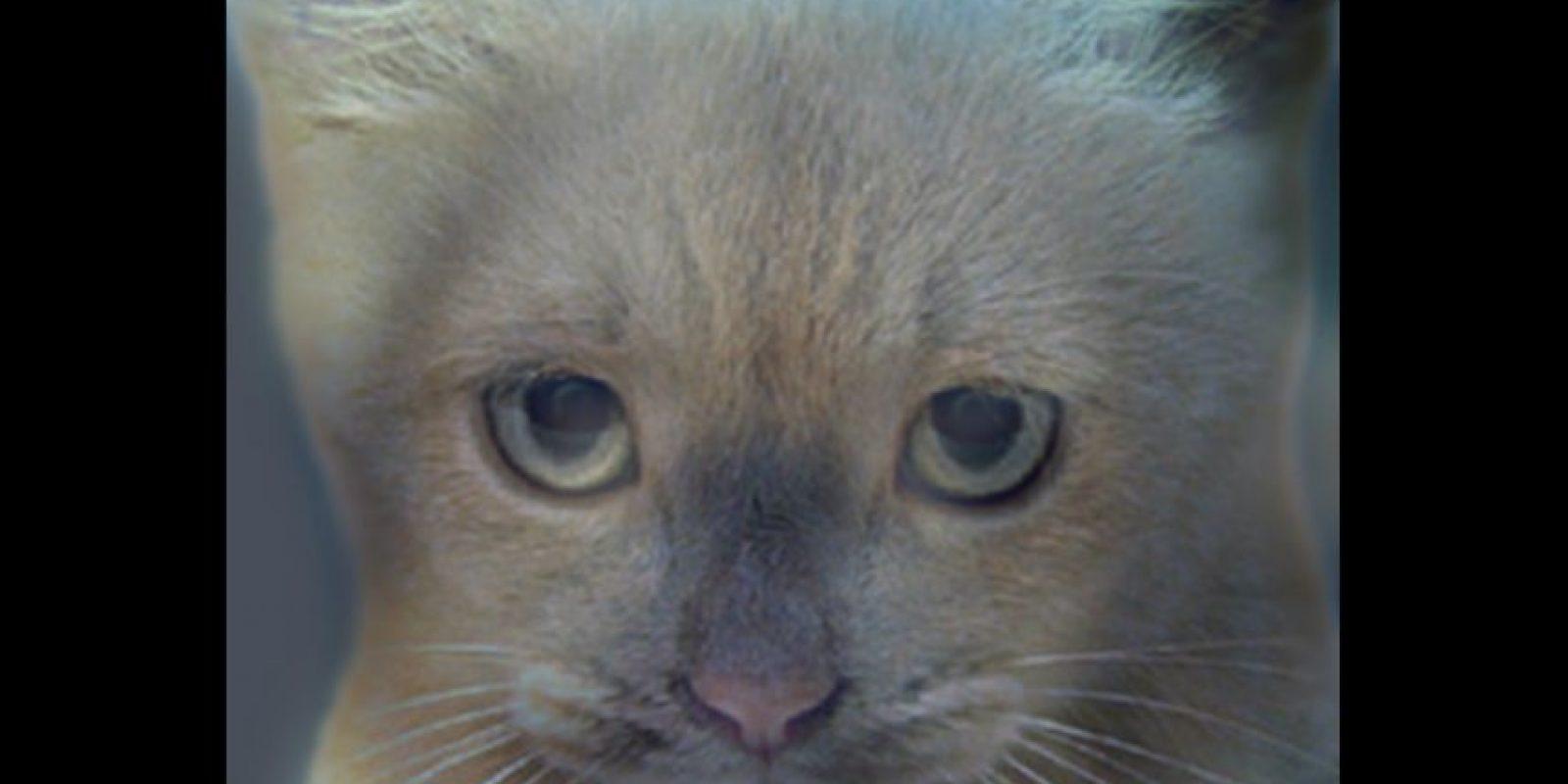 ¿Un gato o un perro? Foto:mit.edu – Aude Oliva