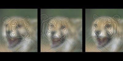 ¿Un cheeta o un tigre? Foto:mit.edu – Aude Oliva