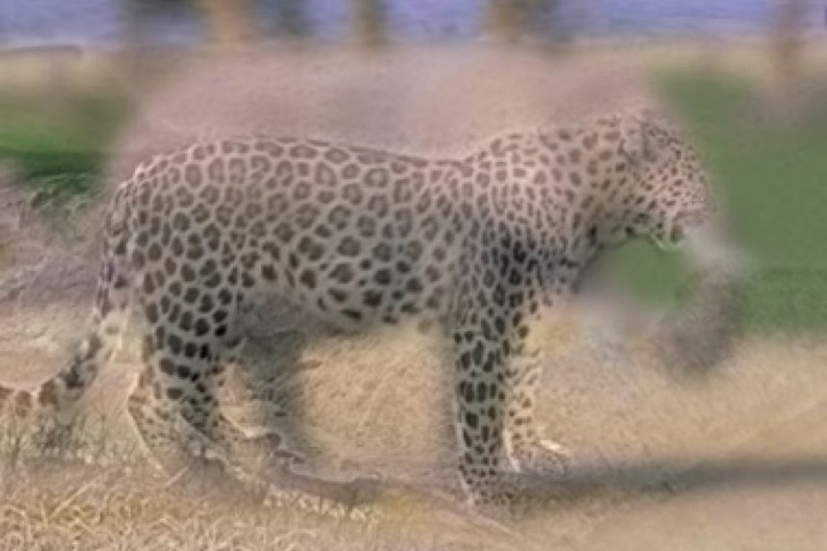 ¿Elefante o leopardo? Foto:mit.edu – Aude Oliva