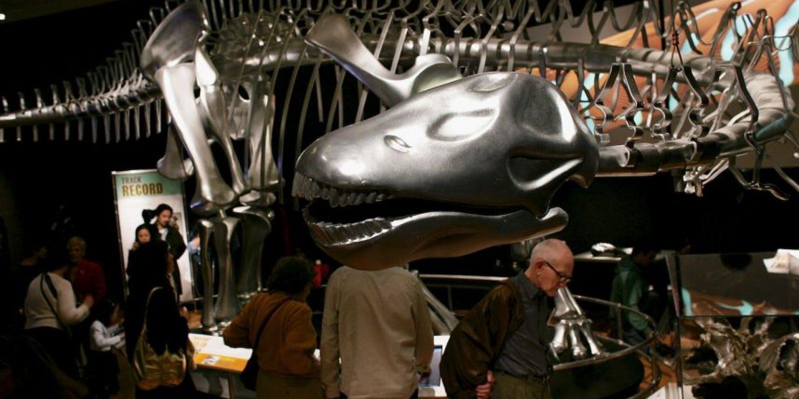 Es uno de los dinosaurios más populares, con su cuello y su cola largos. Foto:GETTY