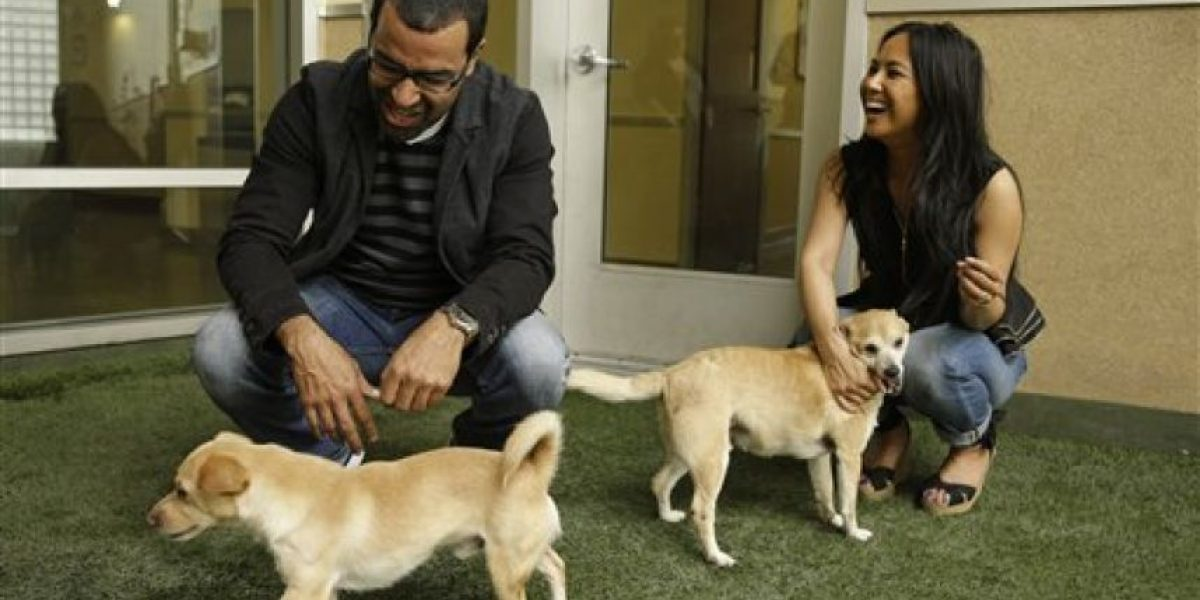 En esta ciudad usan el ADN para obligar a dueños de perros a limpiar heces