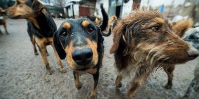 En Bolivia acusan a un perro de abusar de un niño de 4 años