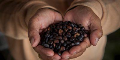 Es recomendable mezclar los restos de café con un poco de aceite de coco y posteriormente frotarlo de manera circular por toda la piel. Foto:Getty Images