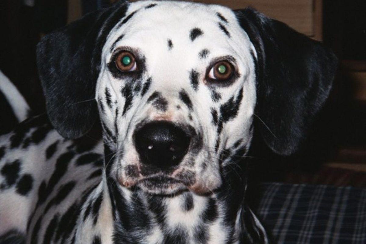 10. Elimina olores de las mascotas Foto:Wikimedia