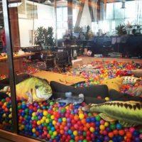 Algunos pescados decoran el lugar. Foto:instagram.com/bobspace