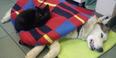 """FOTOS: Este es el """"gato enfermero"""" que los hará sonreír de ternura"""