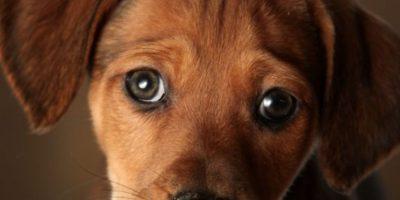Una mujer se enteró de que su novio tenía sexo con su cachorrito de 10 meses cuando este envió por error un video en el que abusaba del mismo. Foto:Getty Images
