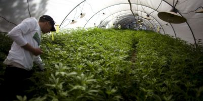 Países en los que la marihuana está más barata Foto:Getty