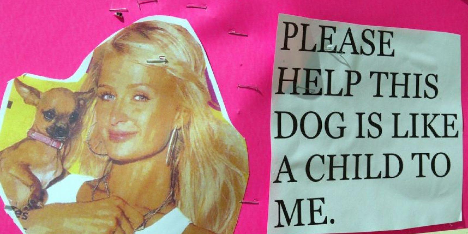 Paris ofreció una recompensa de 5 mil dólares a cambio de su perro. Foto:Getty Images