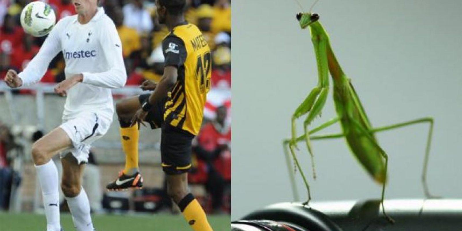 Con esa pose, no cabe duda que el delantero inglés Petr Crouch tiene a su doble en esta mantis religiosa. Foto:http://footyjokes.net