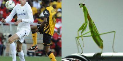 FOTOS: Estos futbolistas tienen sus dobles en los animales