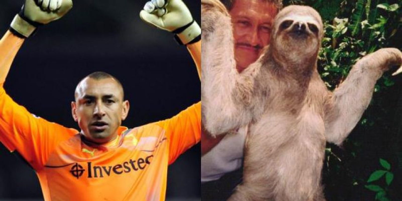 El arquero brasileño Heurelho Gomes tiene hasta la misma pose que este perezoso. Foto:http://footyjokes.net