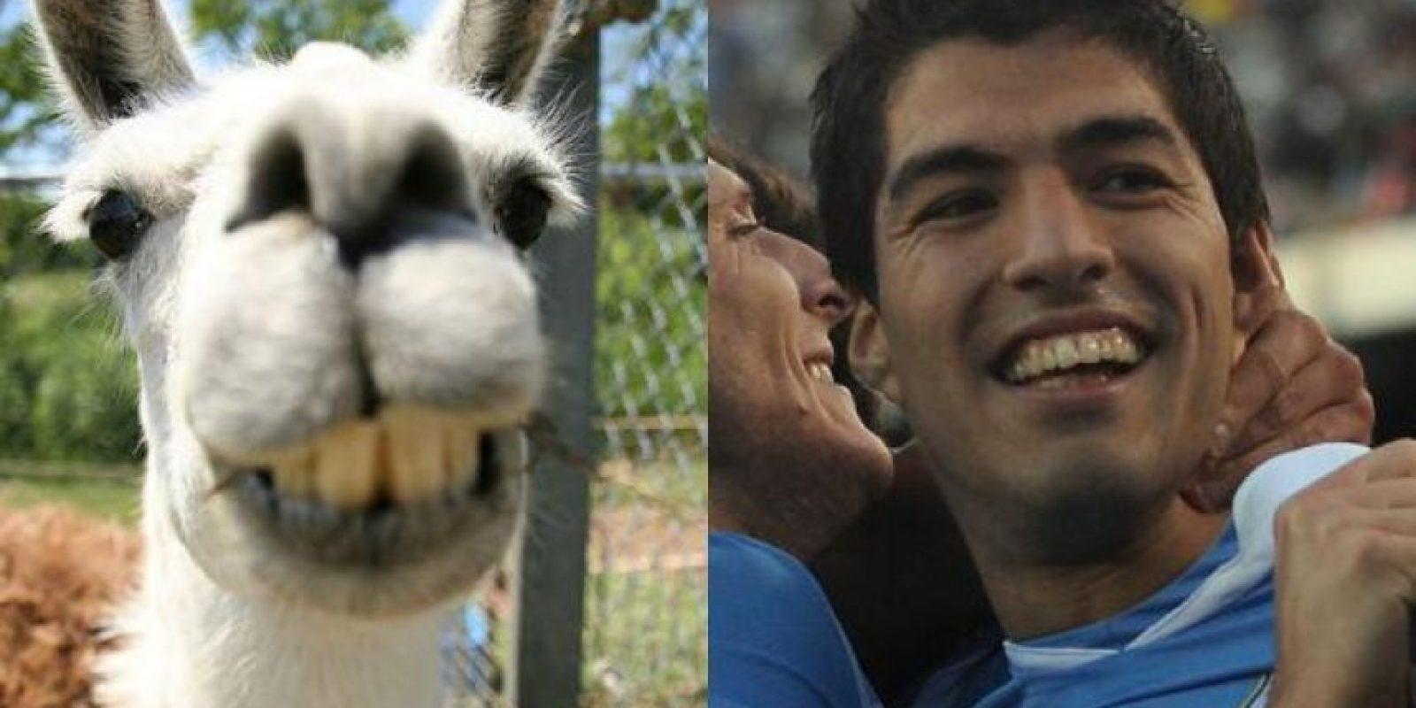 ¿Se parecen? Luis Suárez y esta llama. Foto:http://footyjokes.net
