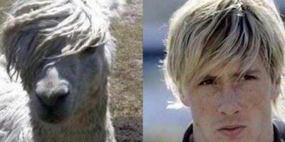 """Ahora, la llama es el clon de Fernando """"Niño"""" Torres, sobre todo por el peinado. Foto:http://footyjokes.net"""