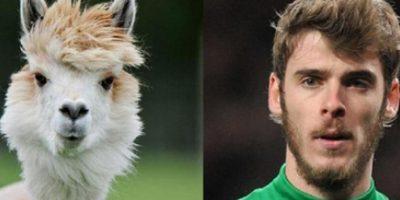 El portero del Manchester United y esta alpaca peruana… ¡Hasta el mismo peinado tienen! Foto:http://footyjokes.net