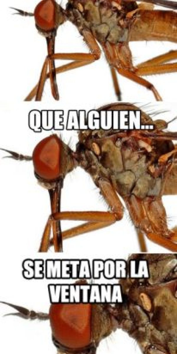 Foto:Tumblr.com/Tagged-mosquito