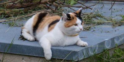 Luego de su salida de la cárcel, Parton ha continuado alimentando a los felinos, aun sabiendo las consecuencias que conlleva. Foto:Pixabay