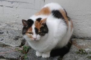"""2. La revista """"American Journal of Cardiology"""" dio a conocer que las personas que habían tenido un infarto presentaban una mayor probabilidad de morir dentro del siguiente año, excepto las personas que tenían un gato. Foto:Pixabay"""