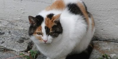 Estudios aseguran que tener gatos mejora nuestra salud