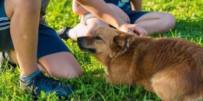 Los perros siempre le brindan a sus duños momentos muy especiales Foto:Pixabay
