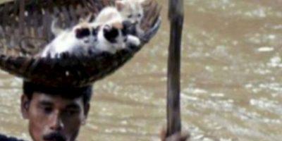 Este hombre salva a unos gatitos de una inundación. Foto:vía AFP
