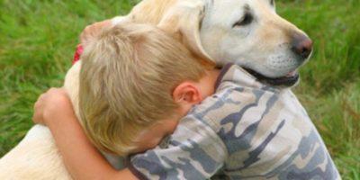 Y cuando necesitan un abrazo Foto:Pixabay